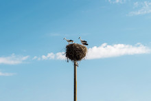 Storks In The Nest Against The...