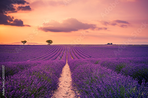 Photo  Panoramic view of French lavender field at sunset