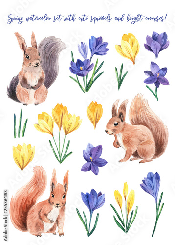 Fotomural  Watercolor cute squirrel with crocus