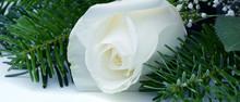 Blumen 1037