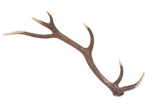 One Deer Antler Isolated On A White Background