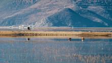 Wildlife On Napa Lake Of Yila Grassland