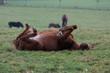 Müdes Pferd