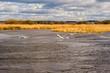 Rzeka Narew. Wiosna nad Narwią. Piękno Podlasia