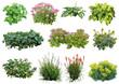 Leinwandbild Motiv Plante détourée (plantes vivaces, hortensia, euphorbe, sedum...)