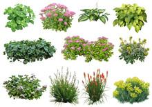 Plante Détourée (plantes Viv...
