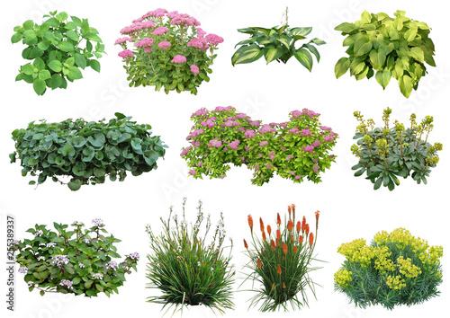 Photo sur Toile Hortensia Plante détourée (plantes vivaces, hortensia, euphorbe, sedum...)