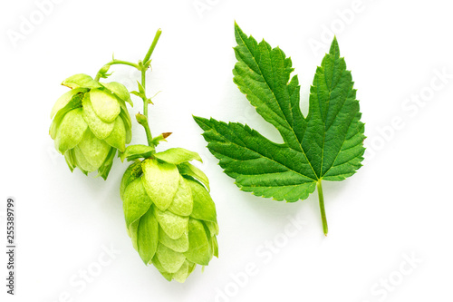 Fotomural Green Hop Plant and Leaf isolated on White Background
