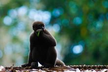 Mono En La Selva Amazónica