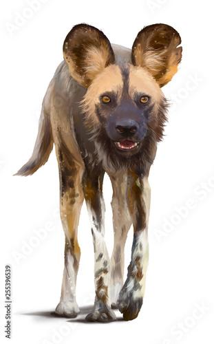 dziki-afrykanski-pies-rysowanie-akwareli