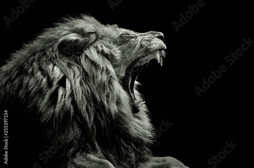 Photo sur Aluminium Lion Lion portrait