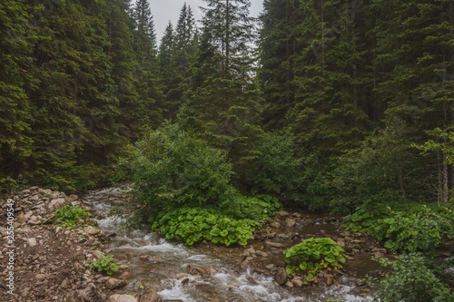 The waters of the mountain river flow through the forest amongst the rocks. Carpathian Mountains