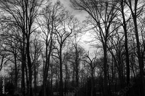 Fotografie, Obraz  moody dark and rainy day at the beginning of spring