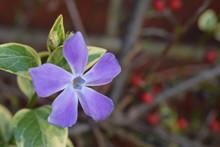 Delicate Pretty Purple Flower