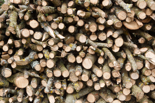 Fotografie, Obraz  Heap of wood logs in a garden after trimming a tree