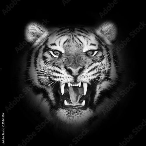 Close up Tiger face, isolated on black background.