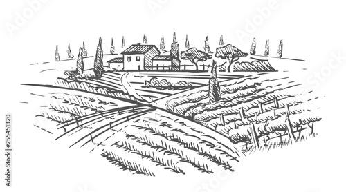 Fotografía Rural landscape with villa, vine plantation and hills