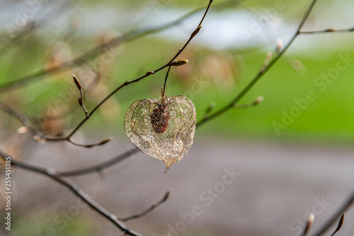 Photo  Physalis hang out on a tree