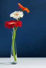 Three Colorful Gerberas In Glass Vase On White Table With Blue Wall Background. Elegant Simple Design With Copy Space For Invitations, Postcards, Quotes, Blogs, Posters, Flyers, Banners, Webs, Prints