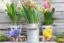 Frühlingserwachen Mit Bunten ...