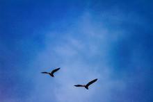 Voo Das Aves