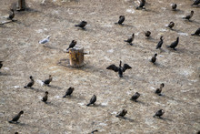 Aerial View Of The Birds Sitting On A Platform. Taken At The Ferry Terminal In North Sydney, Nova Scotia, Canada.