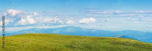 Foto auf Gartenposter Blau panorama of a mountain landscape in summer. beautiful scenery with fluffy clouds above the distant borzhva ridge. huge grassy alpine meadow. location runa, ukraine
