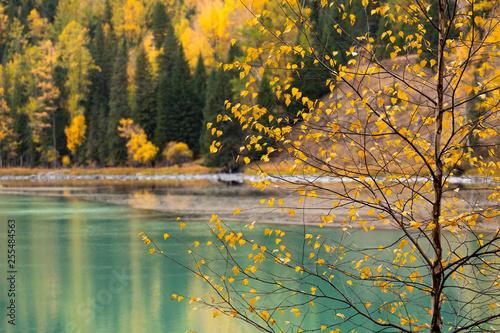 Fotografía  Vibrant yellow autumn scene and lake background at Kanas lake, China