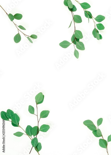 Wall Murals Floral green eucalyptus leaves, herbs, branches, plants frame border on white background top view. copy space. flat lay