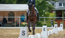 Horse Dressage With Rider In The Dressage Area On The Hoofbeat, Photographed From The Front In The Uphill Gallop..