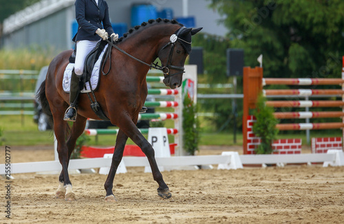 Foto op Canvas Paarden Horse dressage with rider in dressage quadrangle, photographed while passing the turn on the hindquarters..