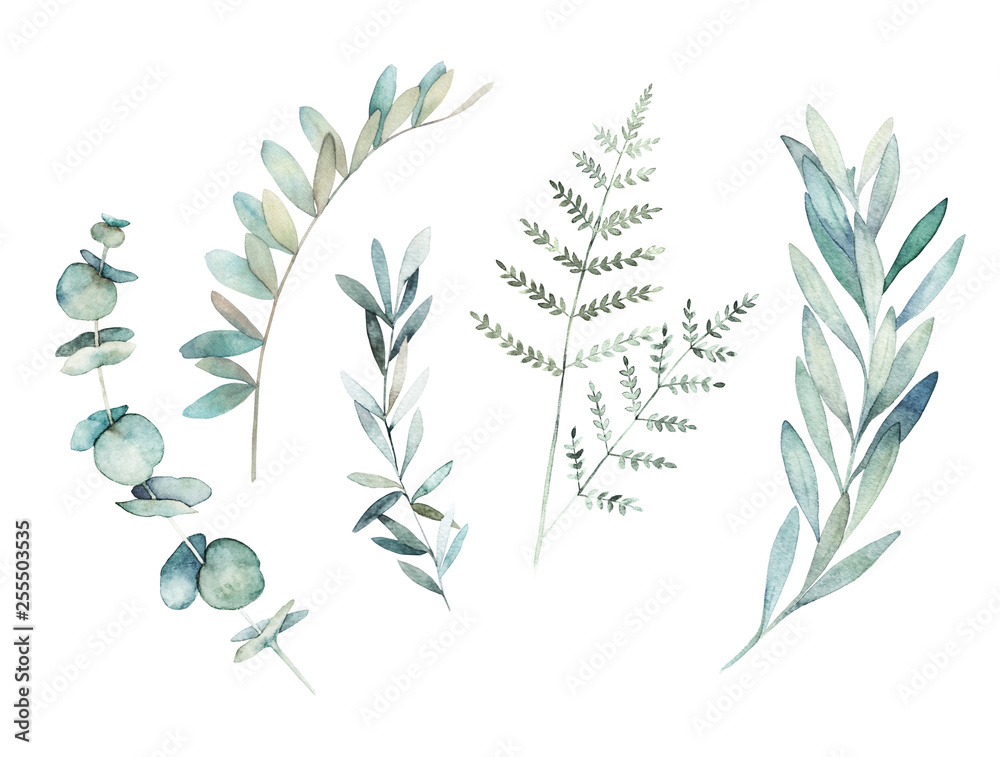 Fototapety, obrazy: Watercolor greenery set. Hand drawn winter illustration with eucalyptus branch, leaves and fern. Vintage botanical plant