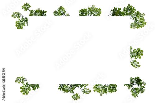 Printed kitchen splashbacks White Green leaf frame isolated
