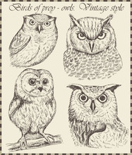 Beautiful Owl In Vintage Style Drawn By Hand. Set Of Hand-drawn Bird
