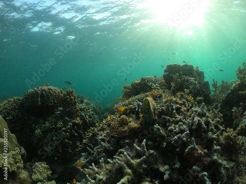 Fotografie, Obraz  fond marin, snorkeling, Cabilao, Philippines