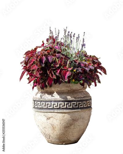 Fototapeta Large old ceramic vase with various flowers isolated on white background obraz