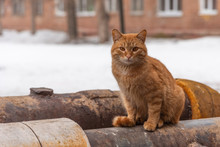 Homeless Street Red Cat Is Heated By The Heating Pipe