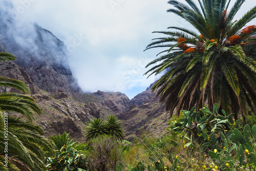 Printed kitchen splashbacks Canary Islands Fabulous Masca mountain gorge the most visited tourist attraction on Tenerife