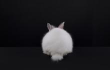 White Rabbit Isolated On Black Background