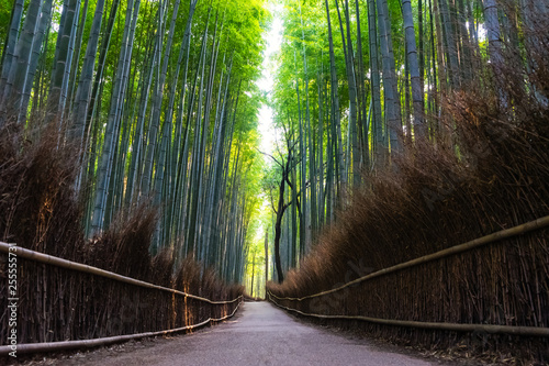 Spoed Fotobehang Bestsellers Bamboo forest of Arashiyama at Kyoto, Japan