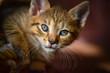The kitten watches