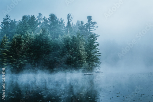 Poster Rivière de la forêt Adirondack Morning