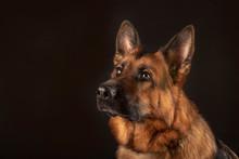 Portrait Of Beautiful Germad S...