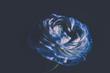 fleur renoncule en couleur sur fonds noir au flash