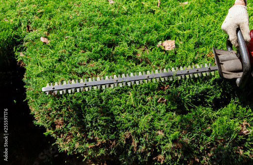 Fotografía  Cutting a hedge with hedge trimmer gardener is trimming branches