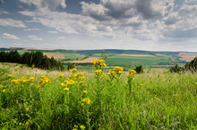 Green Fields - Beautiful Rural Landscape In Northern Bulgaria
