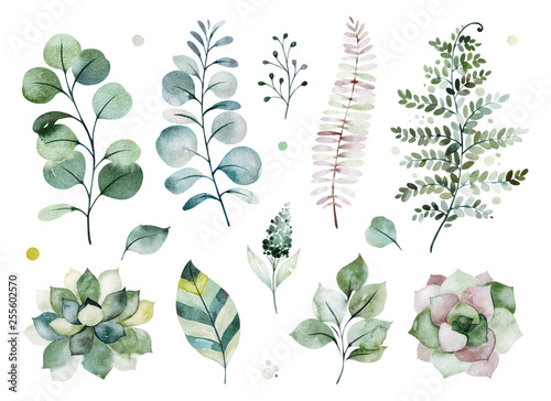 Fototapeta Watercolor Green Collection Texture With Greens Succulents Leaves Fern Leaves Foliage Perfect For Wedding Invitations Greeting