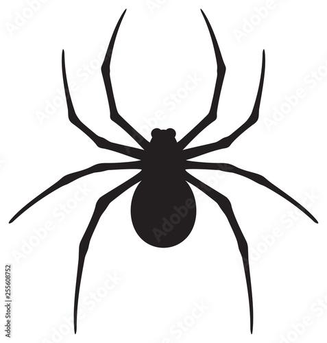 spider icon vector illustration Wallpaper Mural