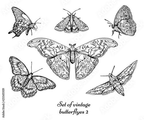 Photo sur Toile Papillons dans Grunge Vintage butterfly vector set illustration.