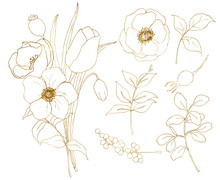Vector Golden Sketch Anemone A...